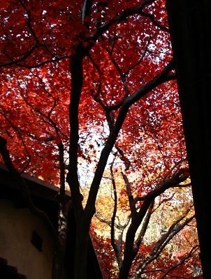 林芙美子記念館の紅葉